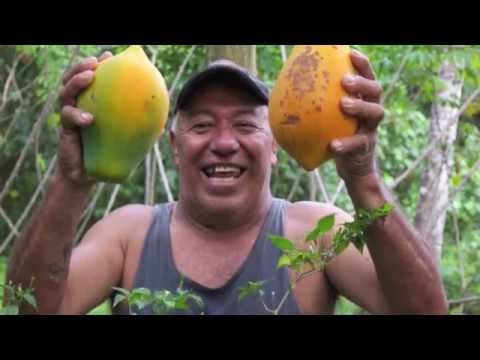 The Internet of Experiences: Papaya breakfast in Fiji
