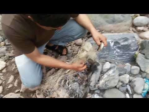Trout fishing in Pakistan