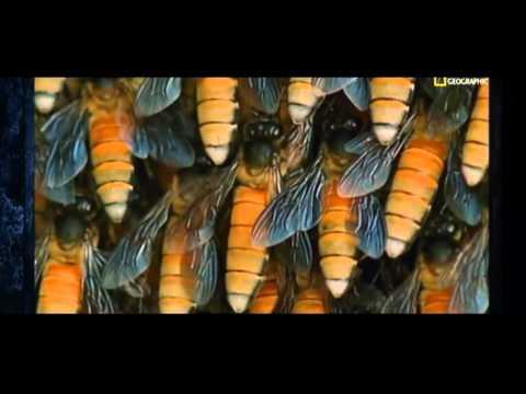 Top 10 - Die tödlichsten Tier Gifte - Doku HD