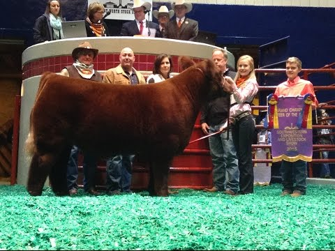 Ft Worth Stock Show Amp Rodeo Sale Of Champions 2012 Doovi