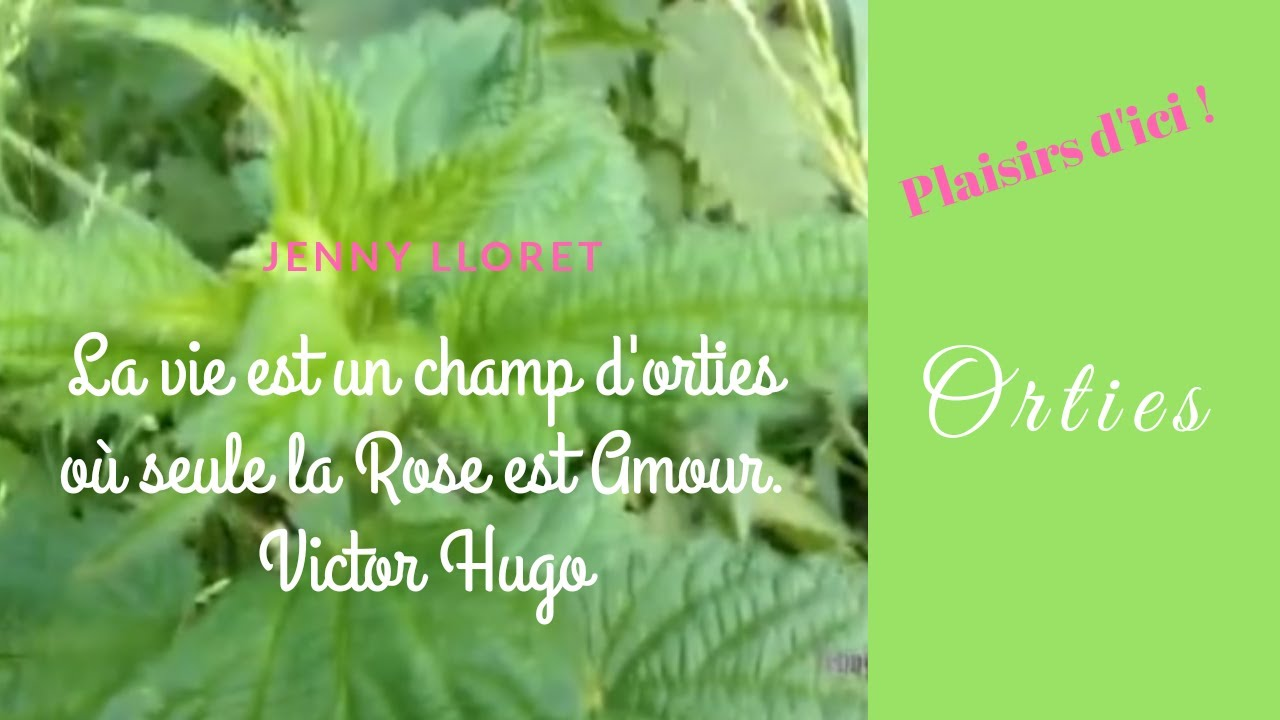 Plaisirs d'ici ! Orties