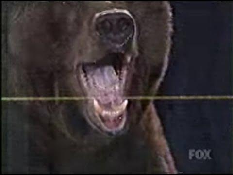 Kobayashi vs Giant Bear