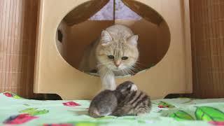 Снова родились котята в питомнике! #Генодетки38