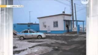 Волк напал на пост ДПС в Астраханской области16+