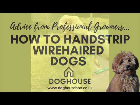 How to Handstrip your Wirehaired Dog | Advice from a Professional Groomer