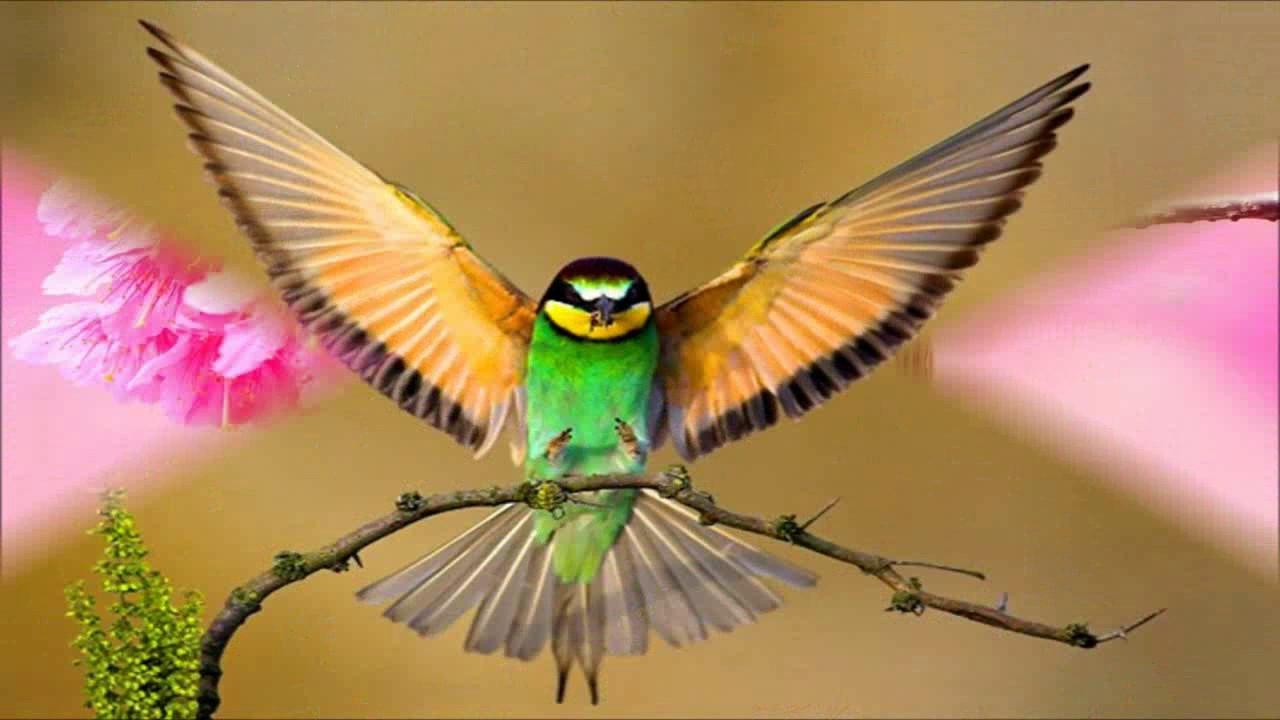 lovely birds wallpaper photos