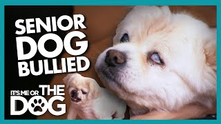 Battle to Make Old Dog's Final Years Peaceful | It's Me or the Dog