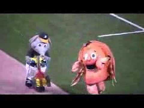 The Great Lou Seal vs Stomper Mascot Race