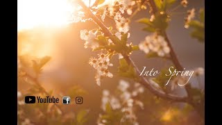 Into Spring - Beautiful Piano (Original Composition)