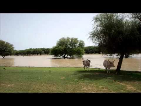 Flooded Senegal river, Gorgol, Mauritania