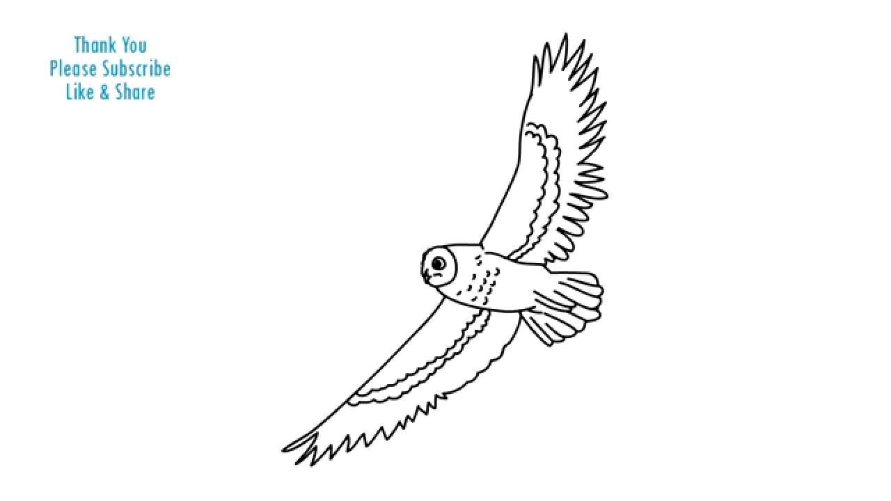 bird drawing simple