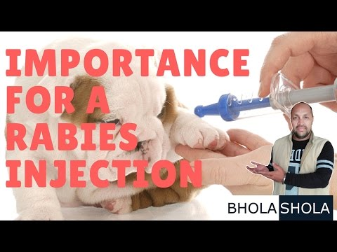 Pet Care - Importance for a Rabies Injection - Bhola Shola