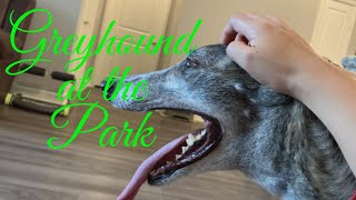 GREYHOUND AND WHIPPET AT THE DOG PARK