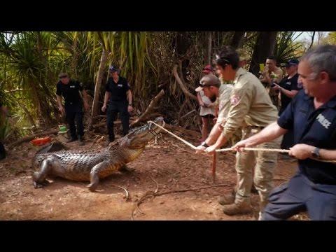 Australia police capture giant cattle-eating croc