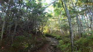 【4K】北奥千丈岳(山梨市) ASMR in the cool forest.【歩く音】