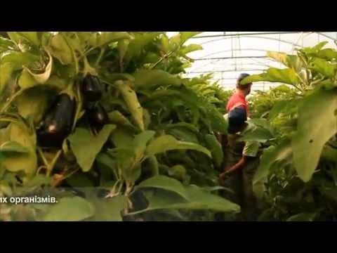 Organic Fruits & Vegetables | Eusafeorganics.gr (Uk)