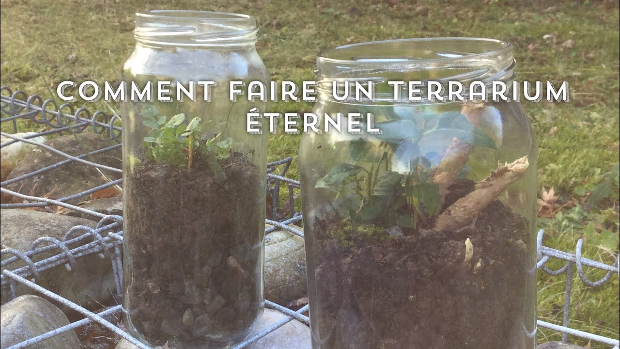 comment faire un terrarium ternel youtube. Black Bedroom Furniture Sets. Home Design Ideas