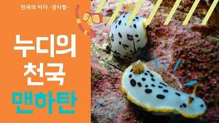 [스쿠버다이빙,scubadiving][코브라다이브,cobradive] 한국의바다 -속초 맨하탄 포인트 펀다이빙