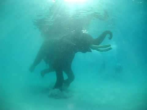 Elephant Swimming, Andaman Islands, India