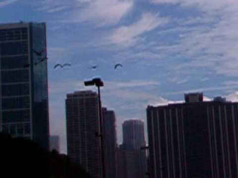 V formation by Flock of Birds