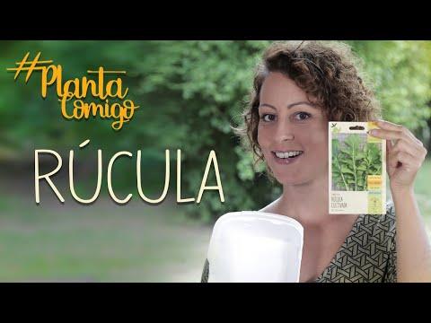VIDA SAUDÁVEL:  Como PLANTAR Sua Própria RÚCULA #plantacomigo