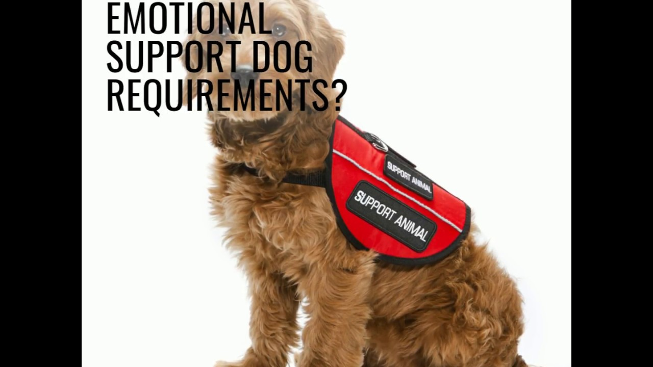 Emotional Support Dog Esa Dogs Guide All You Need To Know Youtube