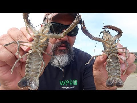 Freshwater Crayfish Catch And Cook