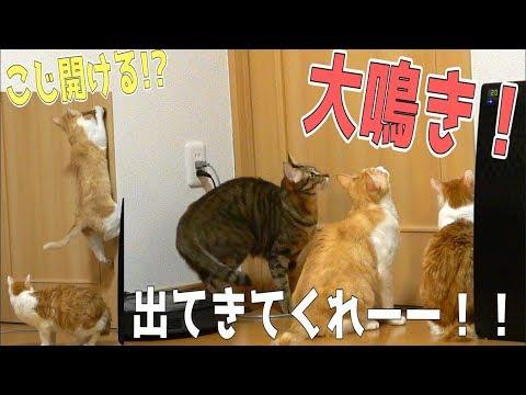 飼い主が部屋に引きこもったら猫たちが必死に呼びかけてきた!!