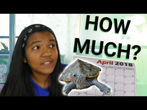 How Much to FEED a Turtle? How Often to Feed Turtles?