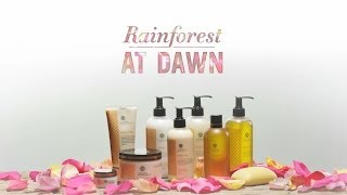 Teadora Rainforest at Dawn 100% Natural Fragrance
