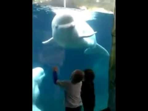 whale CT…Belugas tease our three kids