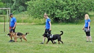 Best Dog Kutyaiskola bemutatója 5. Bárdudvarnok Falunap 2017