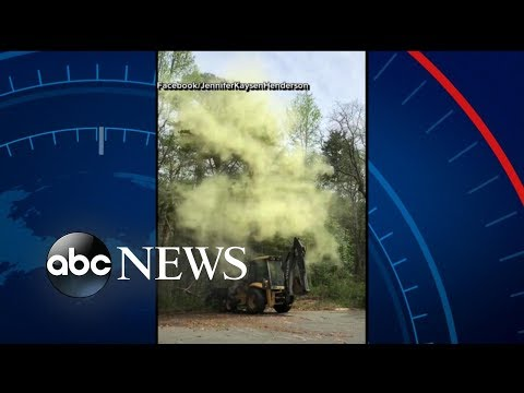 Massive cloud of pollen caught on camera