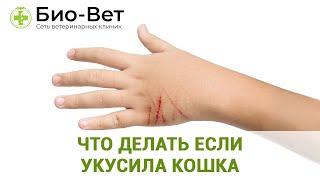 Что делать если укусила кошка. Ветеринарная клиника Био-Вет.