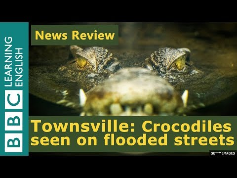 Townsville: Crocodiles seen in Australia's flooded streets - BBC News Review