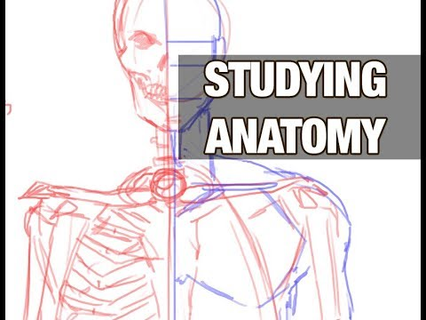 Studying Anatomy For Artists Youtube