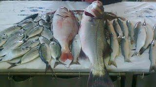 OLTAN BALIK DOLSUN FISHING RULES