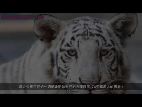 1974年生肖虎,往後10年受財神愛戴,晚年修成正果!