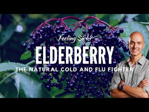 Elderberry Benefits: The Natural Cold and Flu Remedy