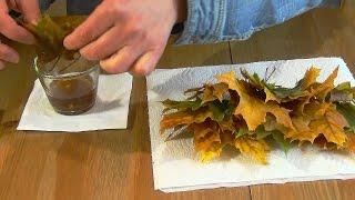 Как сохранить листья растений в глицерине