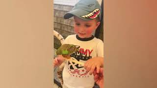 Funniest Baby and Baby Animals Fails - Fun and Fails Baby Video