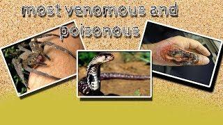 TOP 10 most poisonous and venomous animals - top animal documentary \1# planet (animal documentary)