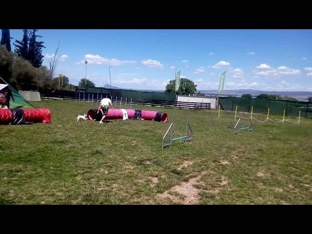 Agility Dog Sport 16-6-2016