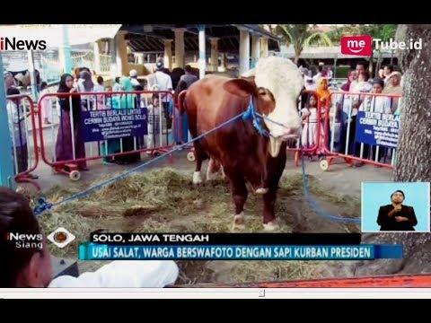 Sapi Kurban Presiden Jokowi Di Masjid Agung Solo Laris Diajak Foto - INews Siang 22/08