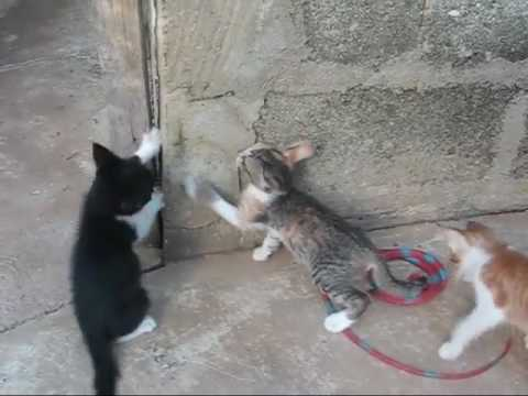 Puppies And Kittens Very Cute But Too Many For Me An Expat Philippines Foreigner Lifestyles Video
