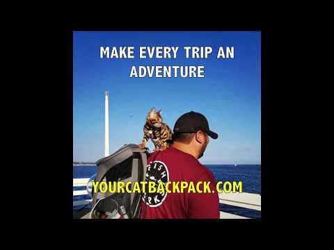 """Adventure Cats in """"The Fat Cat"""" Cat Backpack Your Cat Backpack Bubble Carrier – Hiking & More"""