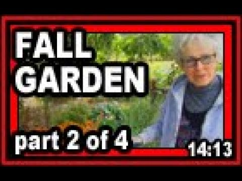 Fall Garden - part 2 of 4 - Wisconsin Garden Video Blog 799