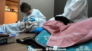 Tiny orphan ringworm kittens get their first bath!  TinyKittens.com