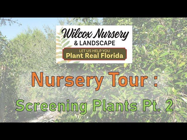 Nursery Tour- Screening Plants, Pt. 2