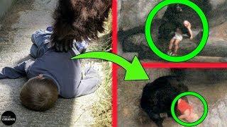 7 Animales Que SALVARON Vidas Humanas